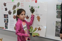 Students compare leaves to a chart