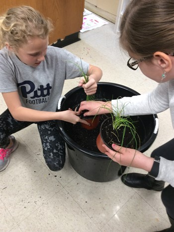 Student getting dirt for her herb garden