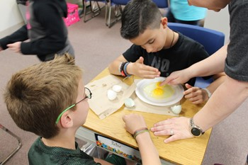 Two students look at egg yolks