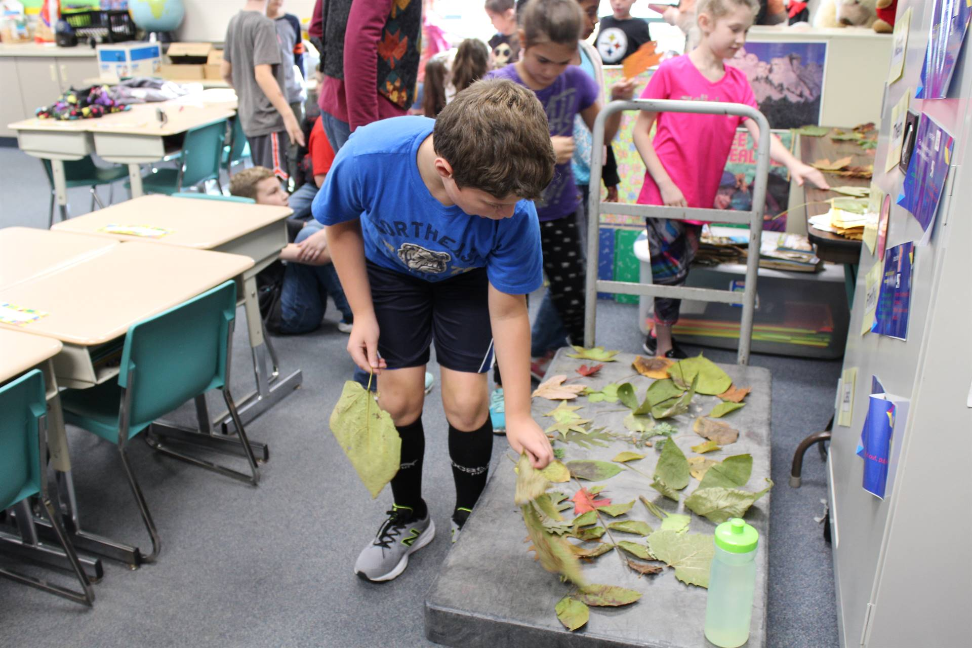 Students get to select two leaves to identify