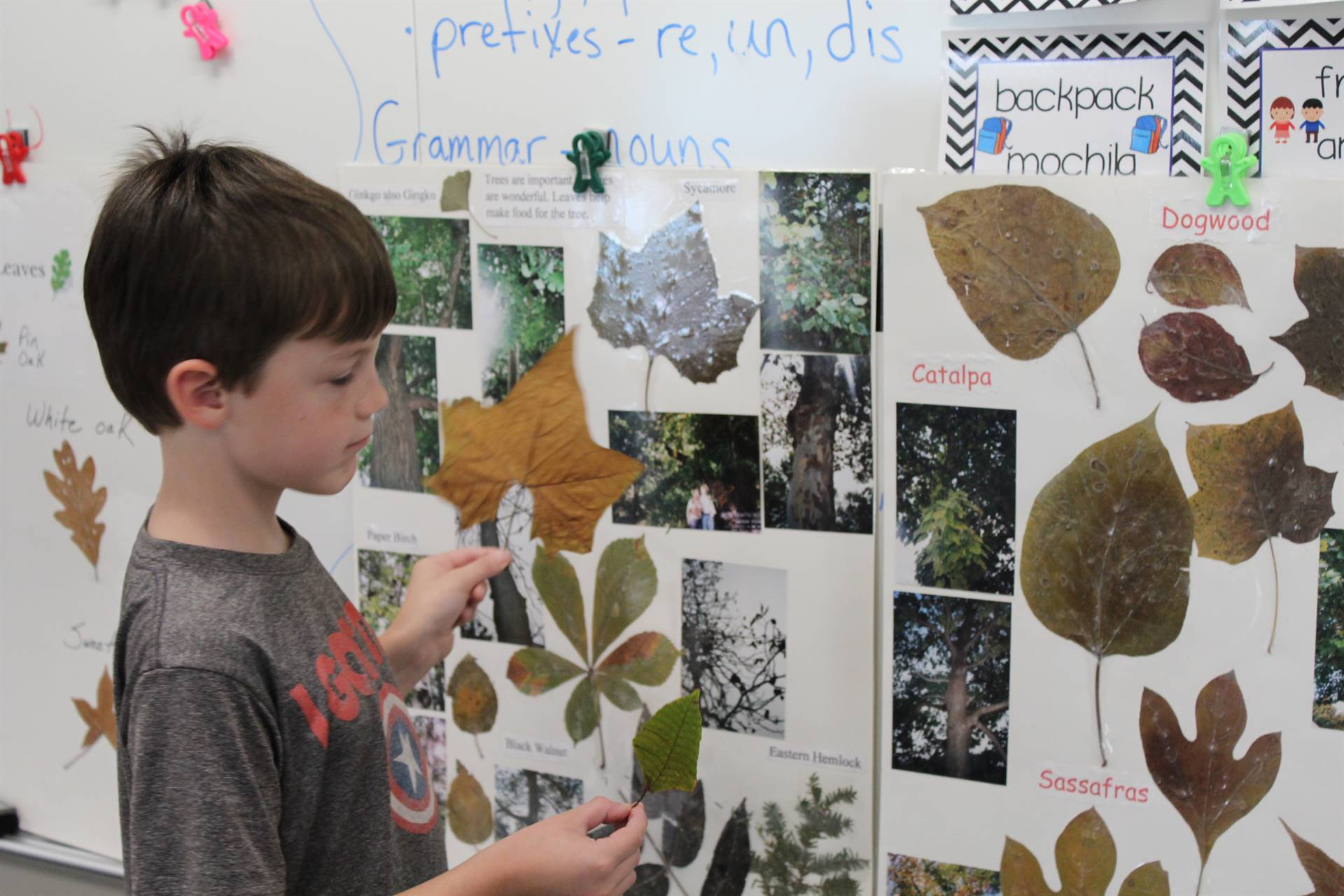 Students match their leaves to a chart