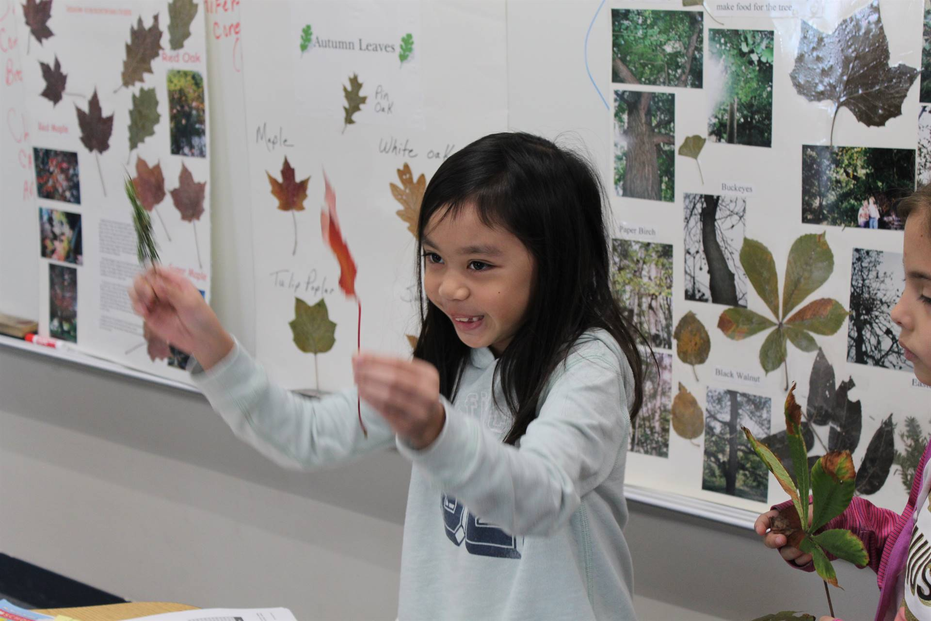 Students identify their leaves