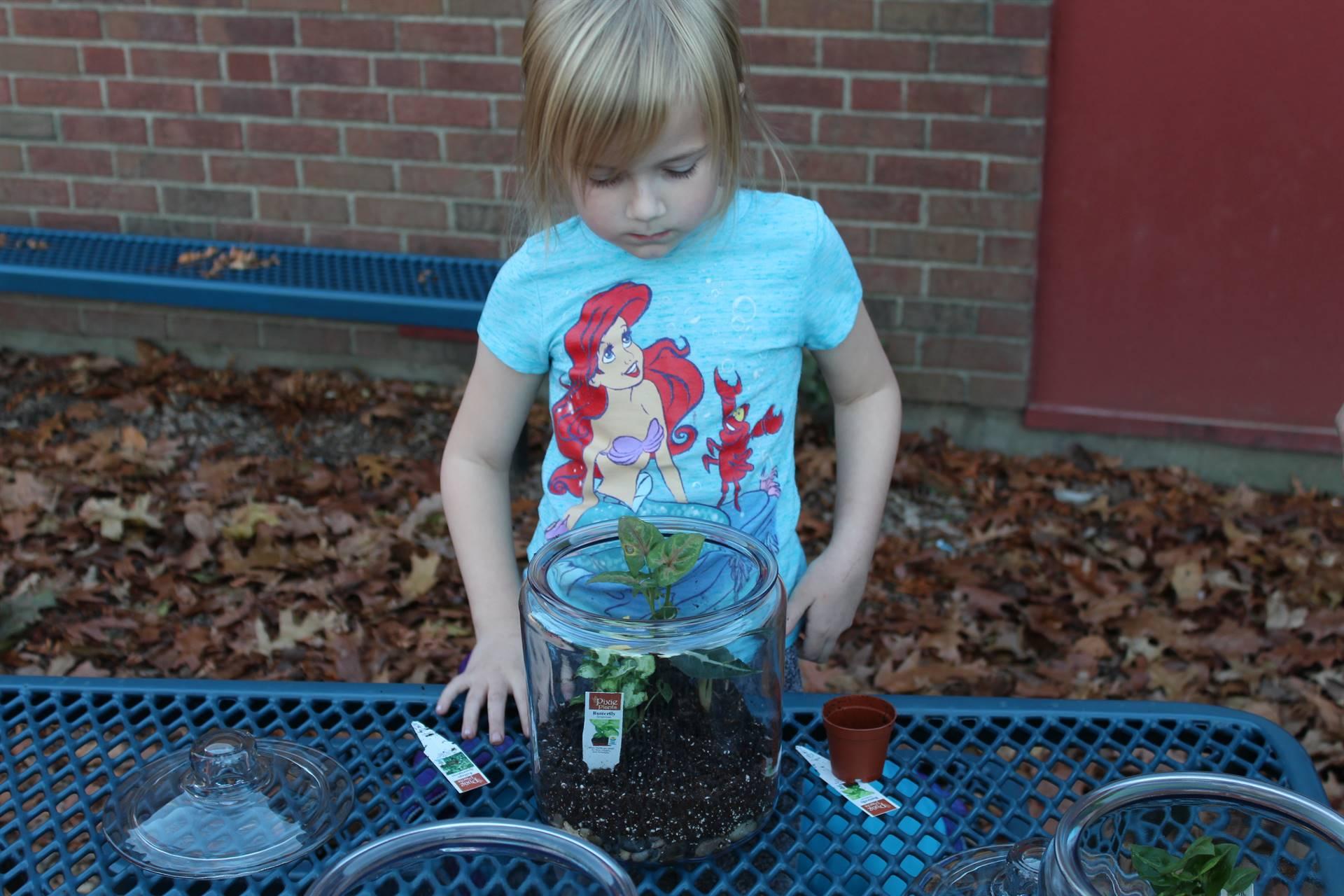Making the terrariums