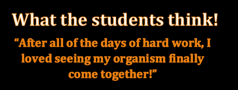 Student quote: after all of the days of hard work, I loved seeing my organism finally come together.
