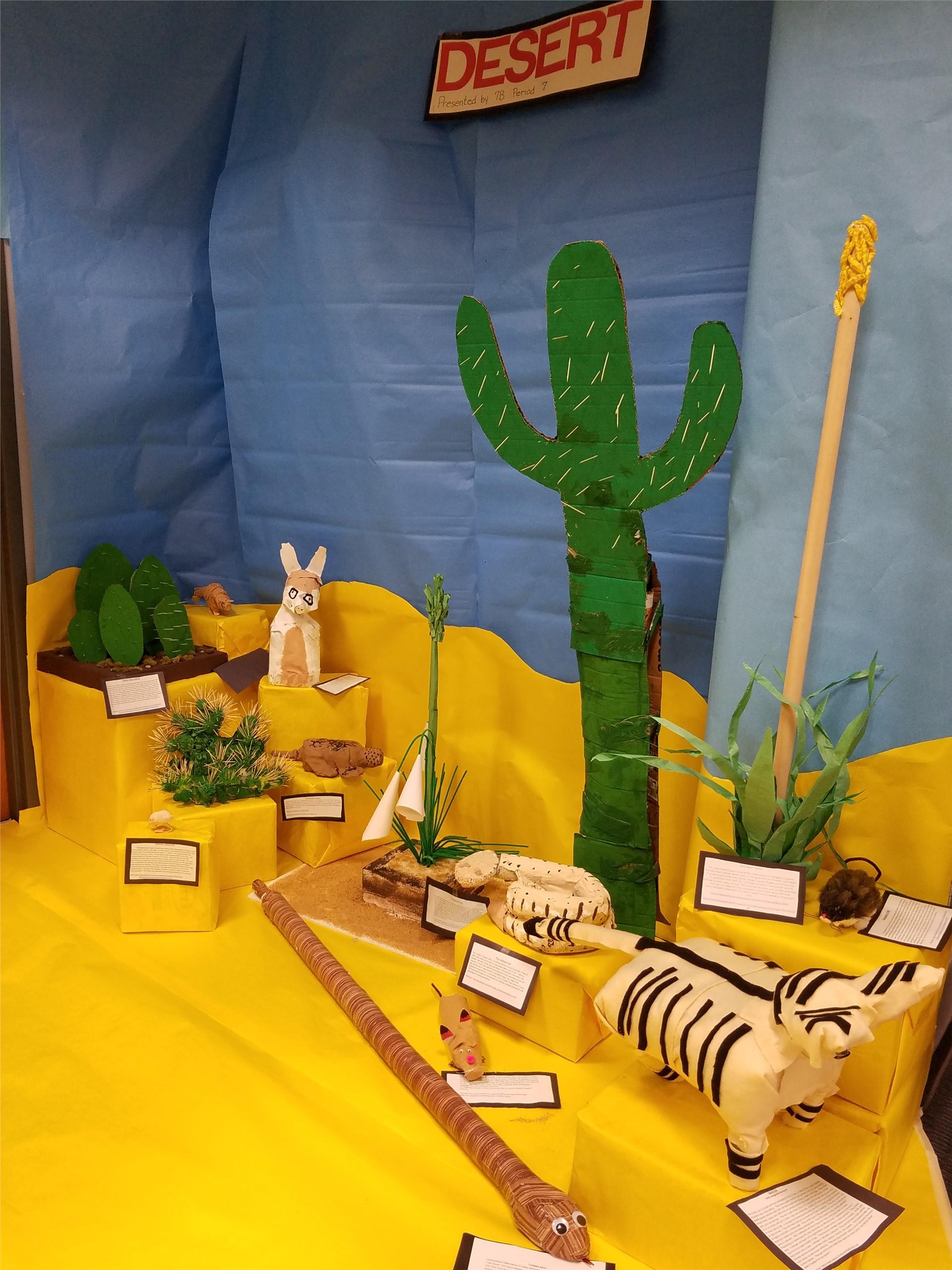 desert biome display