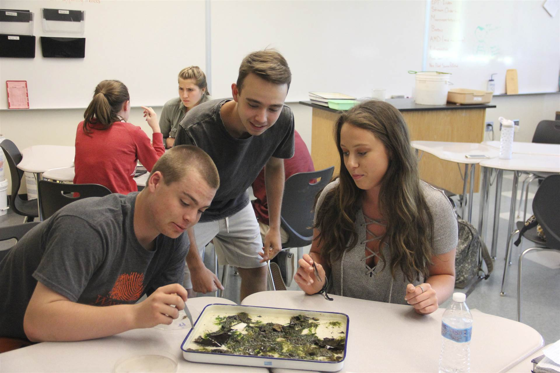 BPHS Environmental Science students analyze their samples in class.