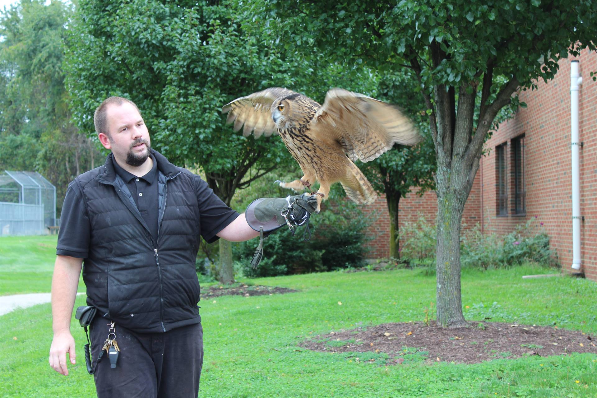 The owl flapping his wings while Mr. Davis holds him