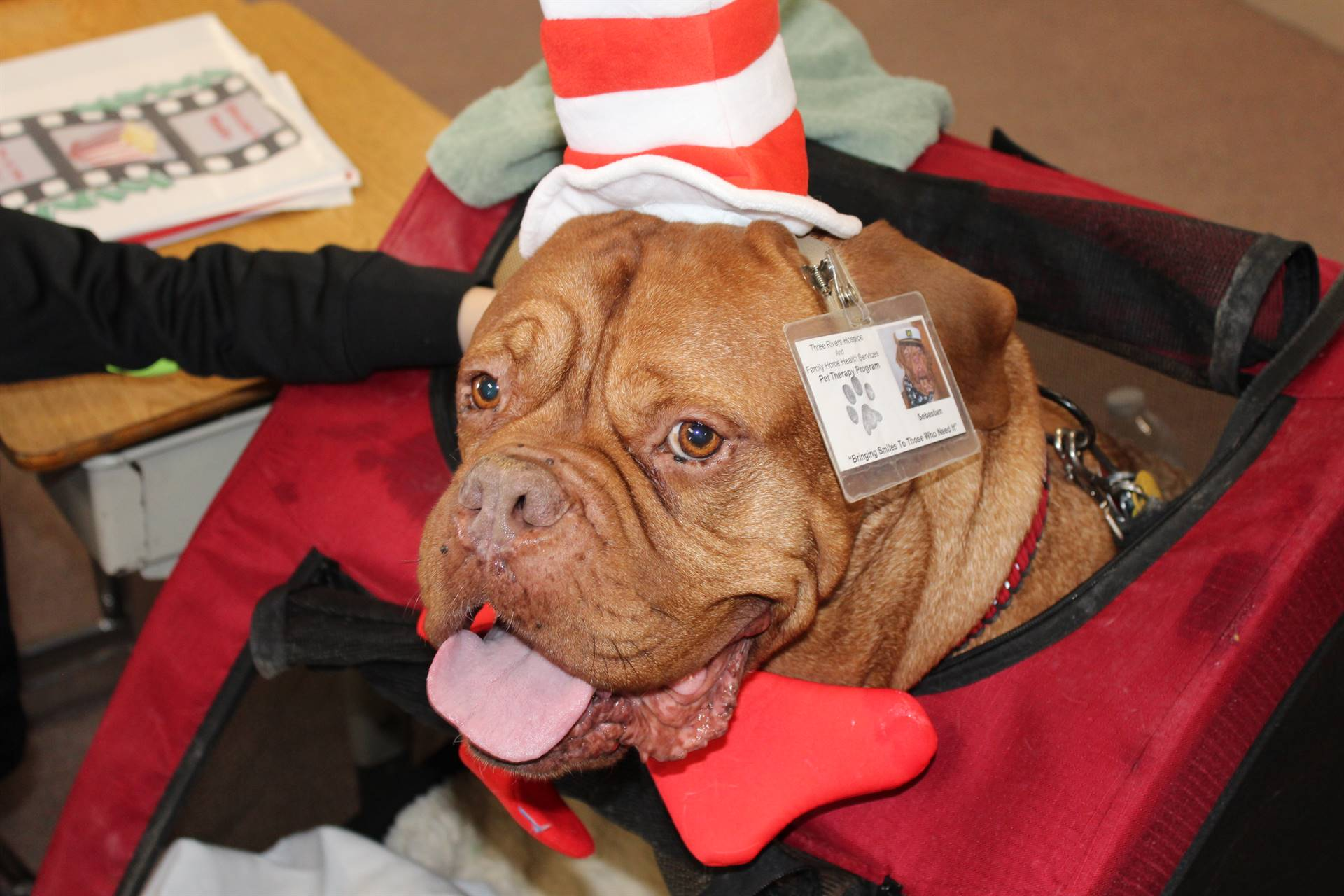 Rescue dog dressed as the Cat in the Hat
