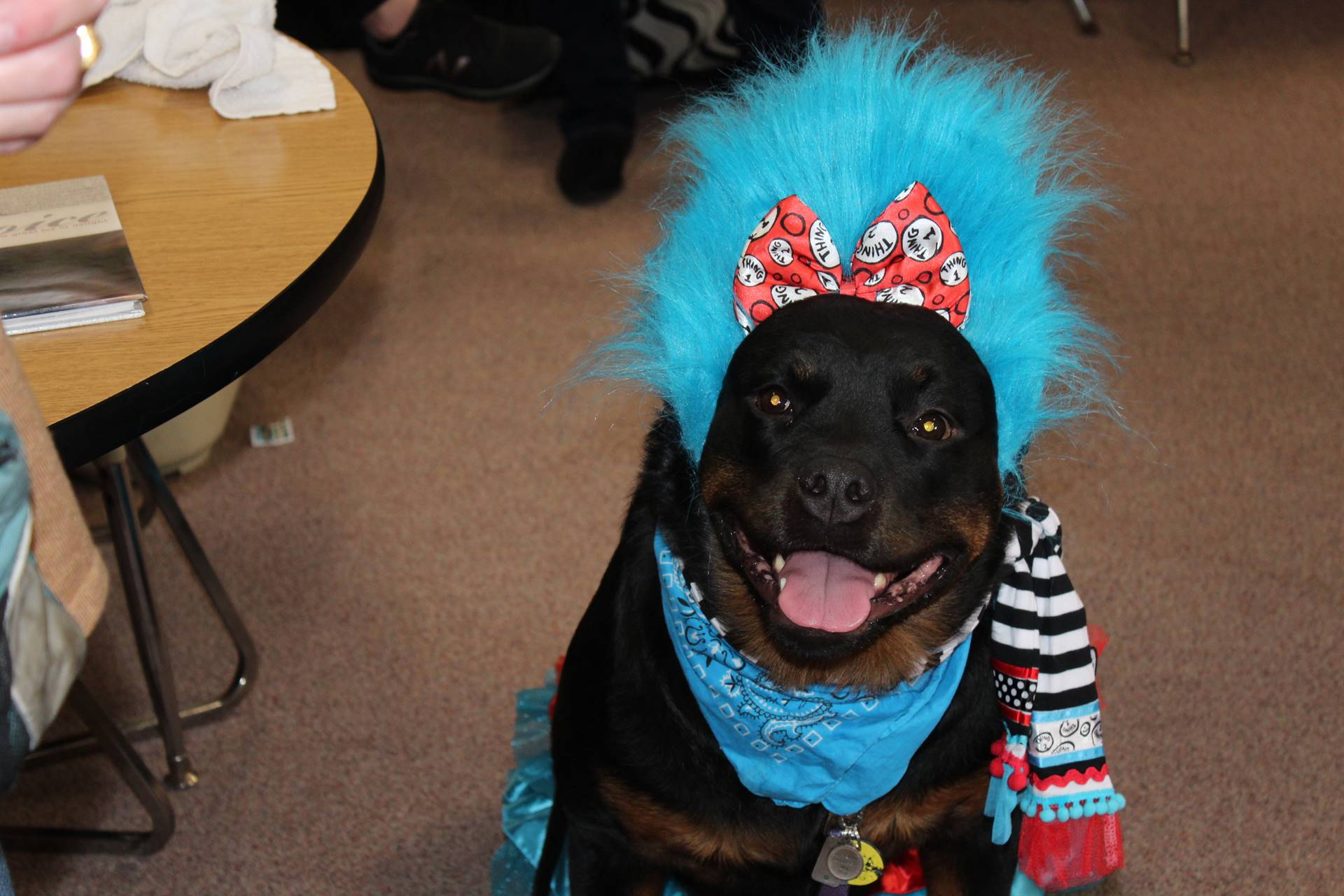 Rescue dog dressed as Thing 1