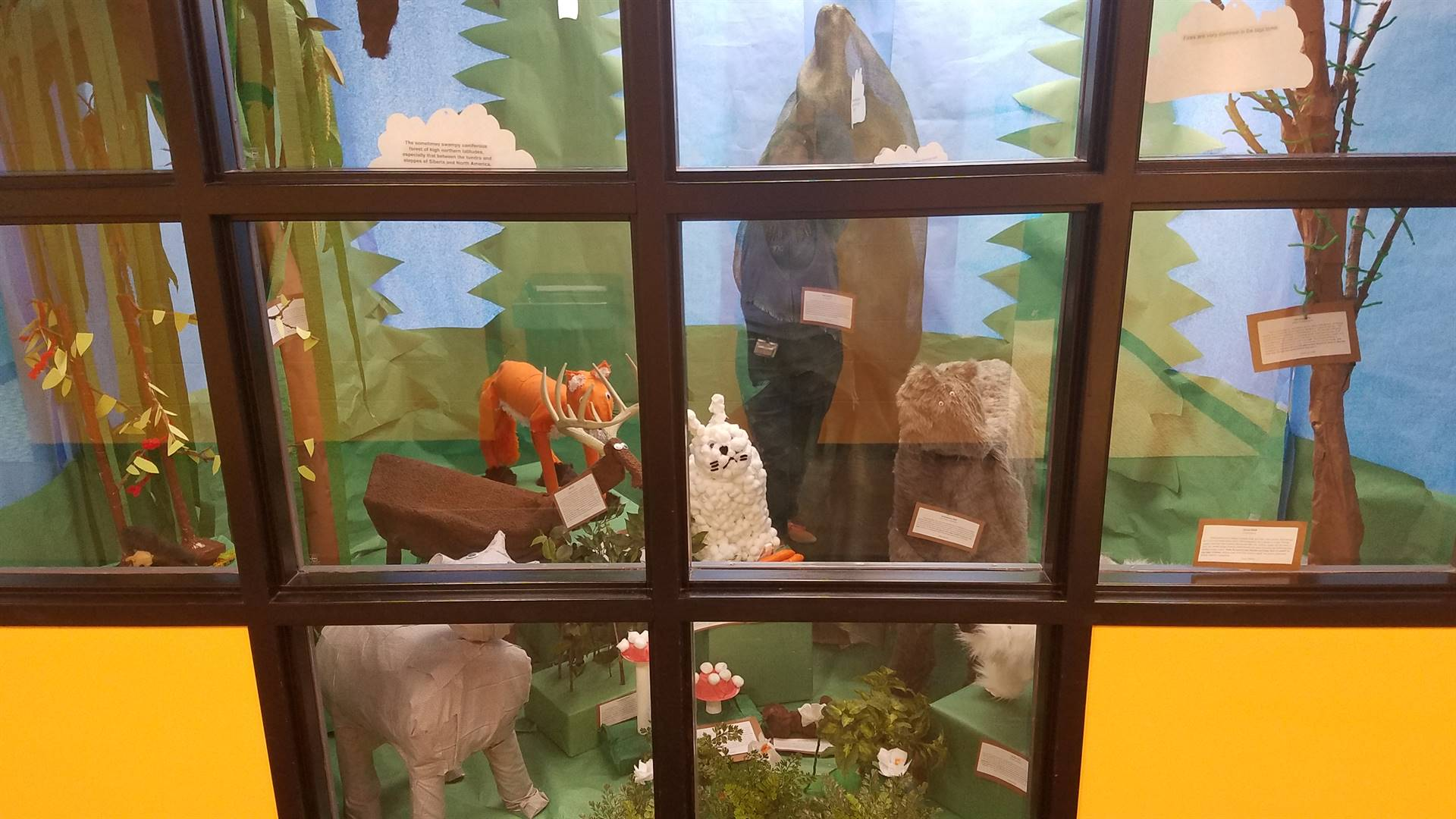 Mrs. Schaum's 7th Grade Biomes Project - Coniferous Forest