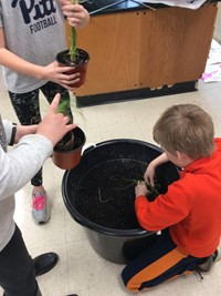 Student filling dirt into his herb garden