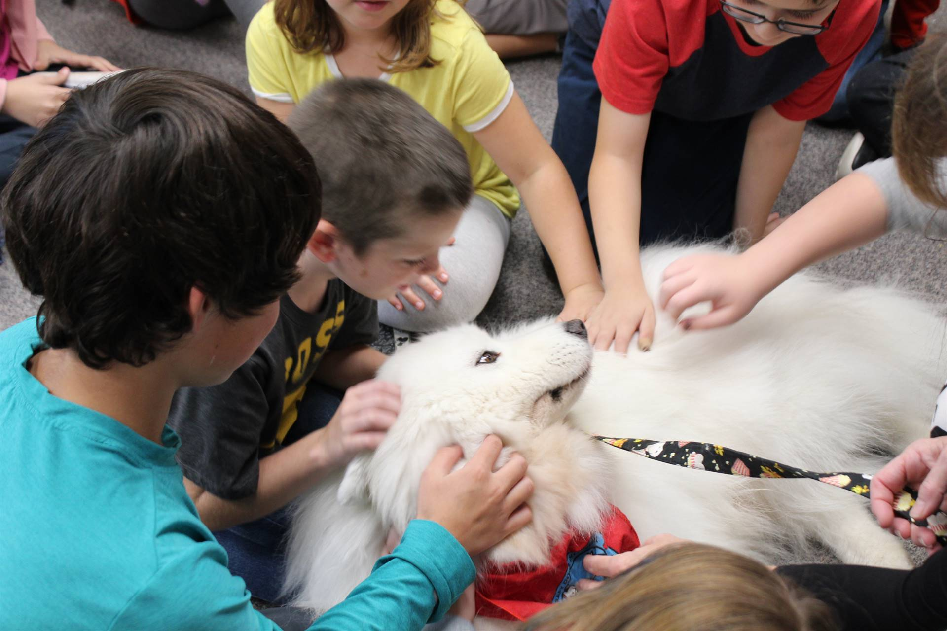 Students pet a therapy dog