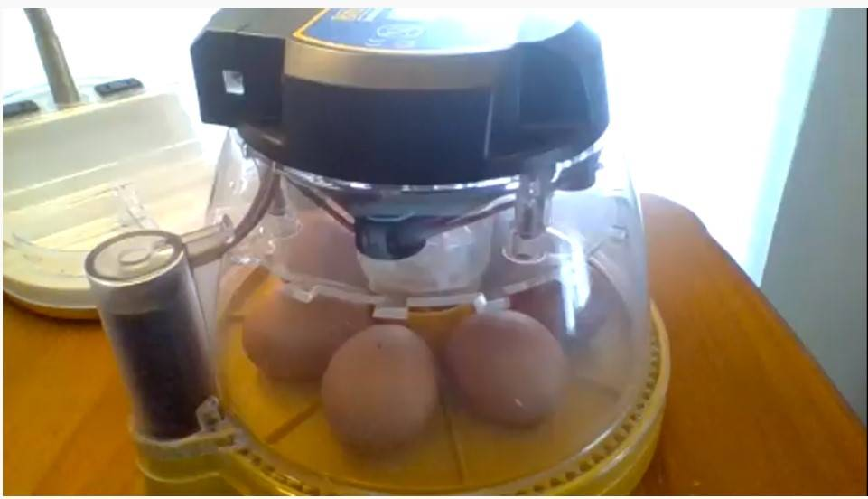 incubator with the eggs