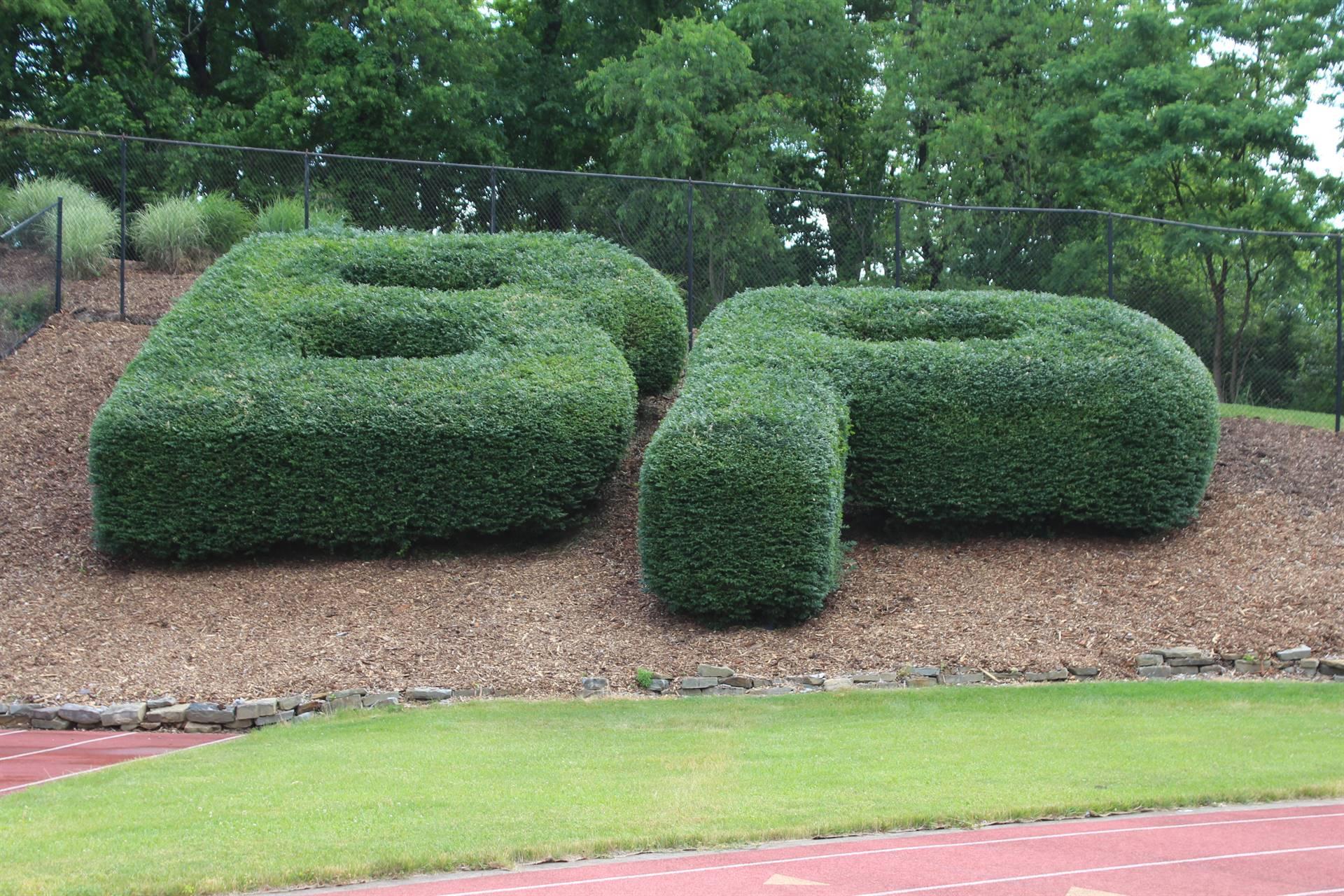 BP bushes